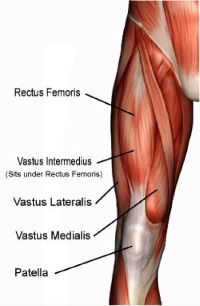 quadriceps-hockey