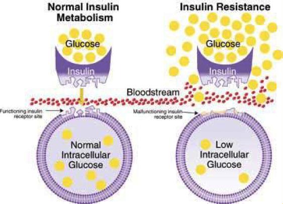 glucose-insulin-sensitivity