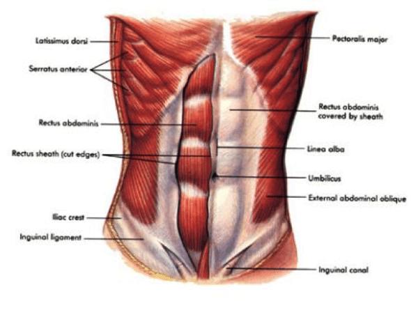 anterior-outer-core